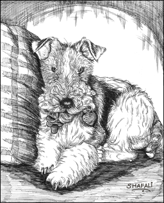 Pen and Ink Pet Portrait Drawing of Dewey Dewster, the Terrier Pup