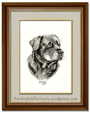 Portrait of a Rottweiler dog - Pen and Ink Drawing - Pet and other Animal Portraits by Shafali