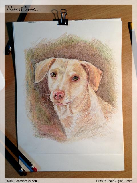 Color Pencil Pet Portraits - Oorvi's Portrait by Shafali - Almost done...
