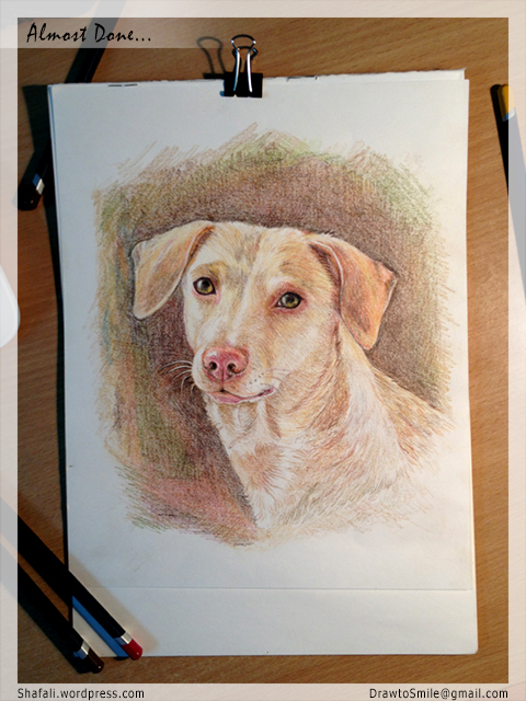 Color Pencil Pet Portraits - Oorvi's Portrait by Shafali - Almost done...