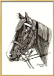 Portrait of a Horse done in pen and ink. And illustration by pet and other animal-wildlife portrait artist Shafali - Also Drawings, Sketches of Cats, Kittens, Dogs, Pups and pets and people.