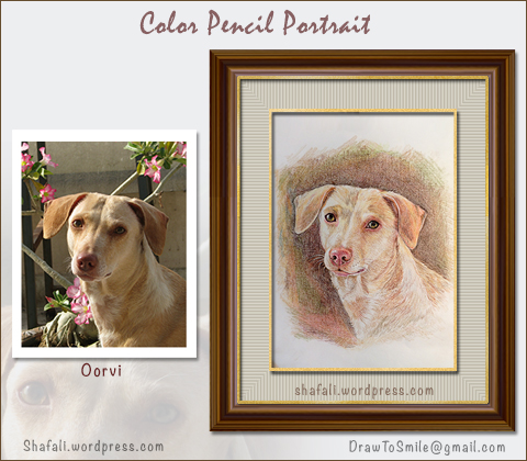 Pet Portraits from Photos - Color Pencil Portrait Art by Artist Shafali.