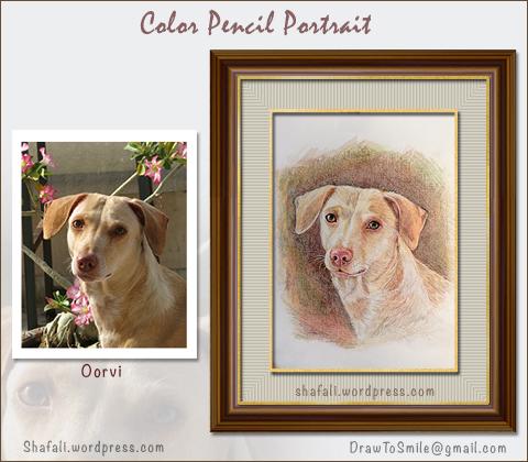 Pet Portraits from Photos - Color Pencil Portrait Art by Artist Shafali.