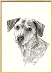 Portrait Commission done in pen and ink by pet portrait artist Shafali from a photograph - Cats, Kittens, Dogs, Pups and Wildlife drawings, illustrations, sketches, art.