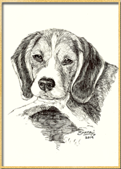 Portrait of Beagle done in pen and ink - Custom Portrait Commissions of Pets by Shafali - Animal drawings, Sketches, Wildlife art etc.