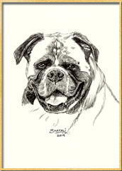 pet-portraits-of-boxer-drawings-of-dogs-pets-animals-wildlife-commissions-pics-on-blog