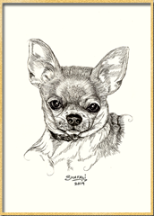 Portrait of Chihuahua dog done in pen and ink by pet portrait artist Shafali - Cats, Kittens, Dogs, Pups and Wildlife drawings, sketches, art.