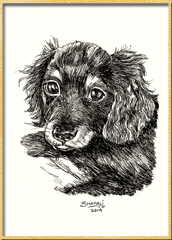 Portrait of Dachshund Wire-haired Pup done in pen and ink - Custom Portrait Commissions of Pets by Shafali - Animal drawings, Sketches, Wildlife art etc in back and white.