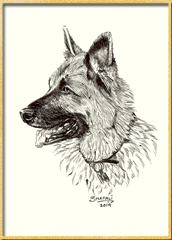 Portrait of German Shepherd a.k.a Alsatian done in pen and ink - Custom Pet Portraits by Shafali - Animal drawings, Sketches, Wildlife art etc.