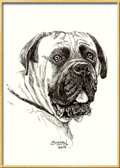 Portrait of the English Mastiff done in pen and ink - Custom Portrait Commissions of Pets by Shafali - Animal drawings, Sketches, Wildlife art etc in back and white.