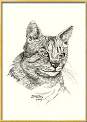 pet-portraits-of-short-haired-tabby-cat-custom-commissions-artwork-of-cats-kittens-wildlife-pics-on-blog