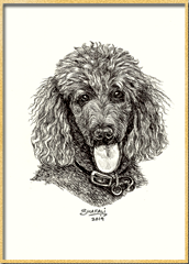 Portrait of Standard Poodle done in pen and ink - Custom Portrait Commissions of Petsby Shafali - Animal drawings, Sketches, Wildlife art etc.