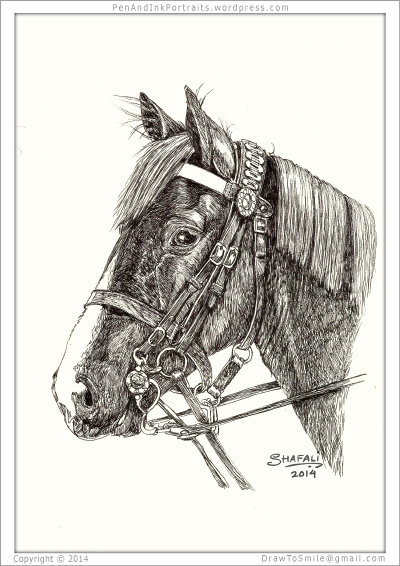 The American Pharaoh look alike? A pen and ink portrait of a beautiful horse.