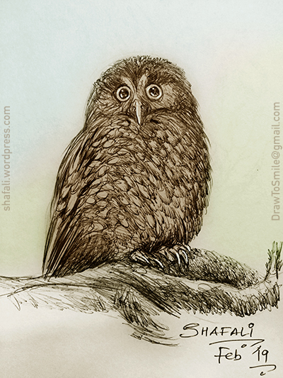 Owl - beautiful birds - the wise birds - pen and ink - ball point pen sketch.